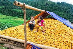 Unidentified ethnic children playing on a bundle of corns Royalty Free Stock Photos