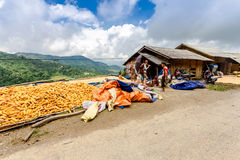 Unidentified ethnic farmers drying corns on a ground yard on mountain Stock Images