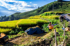 Unidentified ethnic farmers drying corns on a ground yard on mountain Stock Photo
