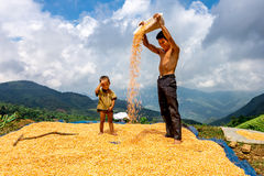 An unidentified ethnic man drying corns on a ground yard on mountain Stock Photography