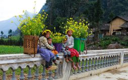 Unidentified ethnic minority kids with baskets of rapeseed flower in Hagiang, Vietnam Royalty Free Stock Image