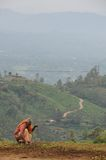 Unidentified farmer handles agricultural planting in the surrounding area of Nuwara Eliya city. Stock Photography
