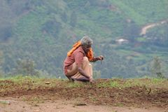 Unidentified farmer handles agricultural planting in the surrounding area of Nuwara Eliya city. Stock Photos