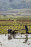 Unidentified farmer plows the paddy field Stock Photo