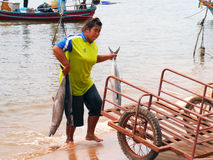 Unidentified fishermen are carry fish to keep the cart. CHUMPHON, THAILAND - SEPTEMBER 22 : Unidentified fishermen are carry fish to keep the cart on September stock images