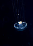 Unidentified jellyfish species at night in the ocean. Royalty Free Stock Photos
