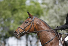 Unidentified jumping rider on horseback overcomes barriers Stock Images