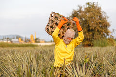 Unidentified man with big bamboo basket and make keeping pineapple Stock Photos