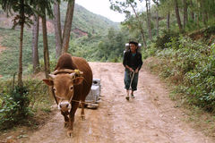 Unidentified man carrying bricks pulled by a zebu Royalty Free Stock Photos