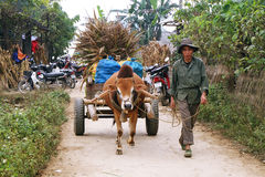 Unidentified man carrying a carriage pulled by a zebu Royalty Free Stock Photos