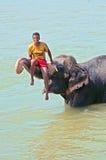 Unidentified man seats on bathing Asian Elephant Stock Photos