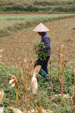 Unidentified man wearing traditional vietnamese hat Stock Image