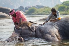Unidentified men bath the elephant Royalty Free Stock Photo