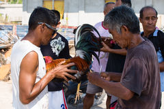 Unidentified men during Philippine traditional cockfighting competition. Stock Photos