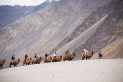 Unidentified people travellers riding on camels Stock Images
