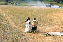 Unidentified people working in rice fields Royalty Free Stock Images