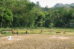 Unidentified people working in rice fields Royalty Free Stock Image