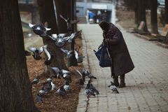Unidentified poor grandmother feeding pigeons in the street Royalty Free Stock Image