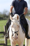 Unidentified rider and a beautiful blue eyed dressage horse gall Stock Image