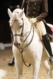Unidentified rider in saddle of a show horse Royalty Free Stock Images