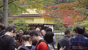 Unidentified tourist looking to Kinkakuji the Golden temple pavilion in Kyoto Japan stock video