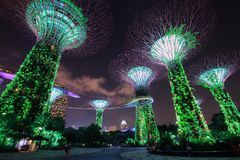 Unidentified tourist visited light of gardens by the bay at nigh Royalty Free Stock Photography