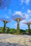 Unidentified tourist visited supertree of gardens by the bay at Royalty Free Stock Images