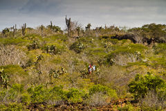 Unidentified tourists hiking along the palo santo Royalty Free Stock Photo