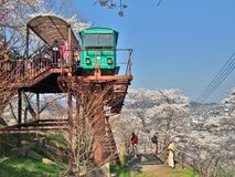Unidentified Tourists and Slope car passing through tunnel of cherry blossom (Sakura) Stock Images