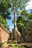 Unidentified tourists visit Ta Prohm temple Stock Photo