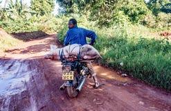 Unidentified Ugandan man transporting domestic pig on a motorcyc Royalty Free Stock Image