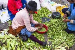 Unidentified woman taking vetch grain market Saquisili Royalty Free Stock Photo