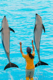 An unidentified woman trainer is showing dolphins. Stock Photo