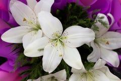 Unie van witte lelies Royalty-vrije Stock Foto