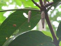 Uniek Caterpillar Stock Afbeeldingen