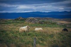 Uniek en mooi land van IJsland Stock Foto