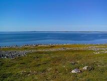 Unieke aard van Groot Zayatskyi-eiland, dat deel van Solovetsky-archipel, Witte overzees, Rusland uitmaakt stock foto's