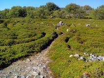 Unieke aard van Groot Zayatskyi-eiland, dat deel van Solovetsky-archipel, Witte overzees, Rusland uitmaakt stock foto