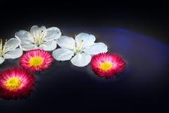 Unieke achtergrond/bloemen stock foto