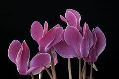 Unieke Bloemen Stock Fotografie