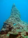 Unieke koraalrifvorming stock fotografie