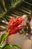 Unieke rode bloem Royalty-vrije Stock Foto's