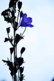 Unik blomma royaltyfri bild
