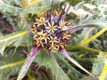 unik blomma Arkivfoto