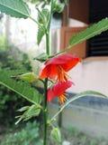 Unik blomma av naturgåvor Arkivfoton