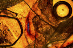 Unik färgrik abstrakt micrograph av ormhud Royaltyfri Fotografi