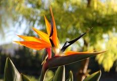 Dekorativ blommafågel av paradiset i naturen Arkivbilder