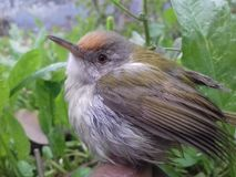 Unik naturlig fågel royaltyfria bilder