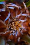 Unik palmbladkärna, makro Fotografering för Bildbyråer