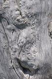 Unik skälltextur: Abstrakt trädstam Arkivfoto
